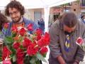 venda roses